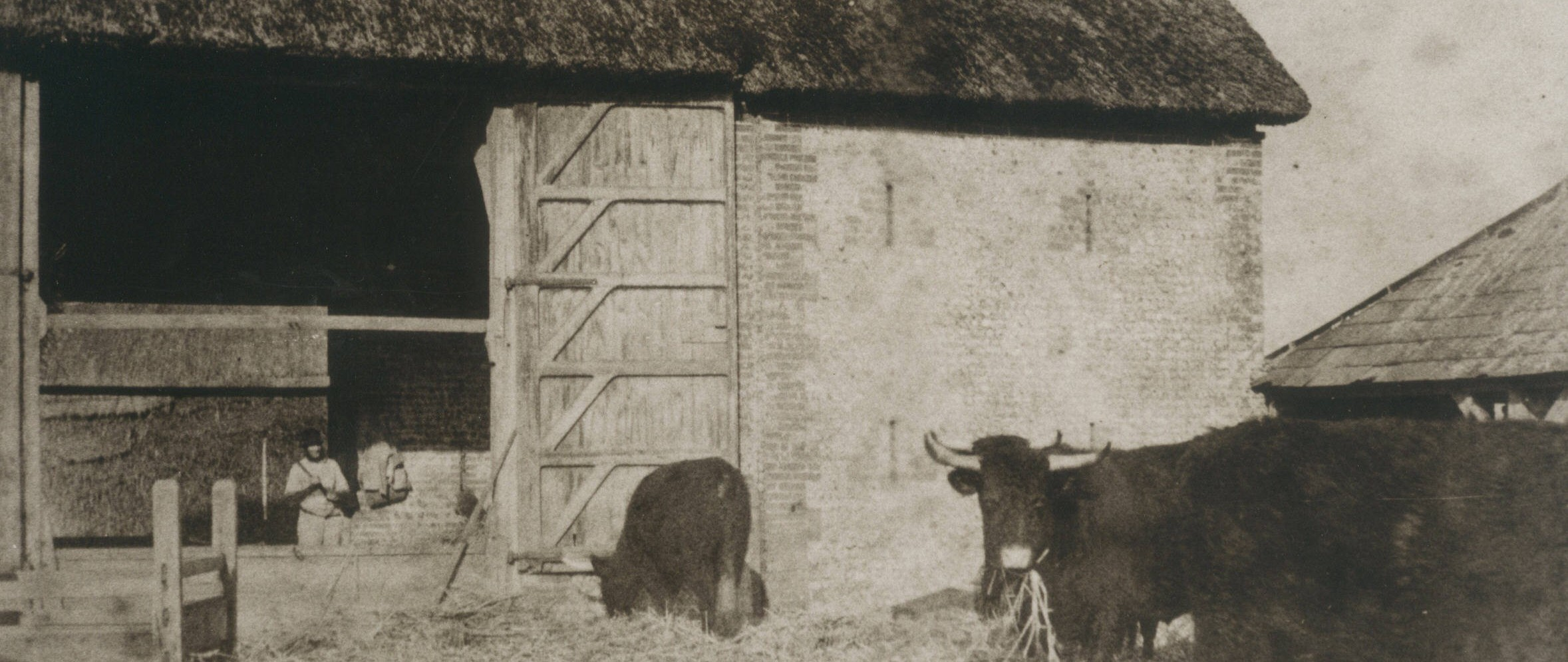 Mill barn Binsted with thresherman and Sussex cattle